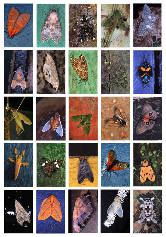 EGD612_Mariposas-Nocturnas-La-Fortuna-Index-No1-2003